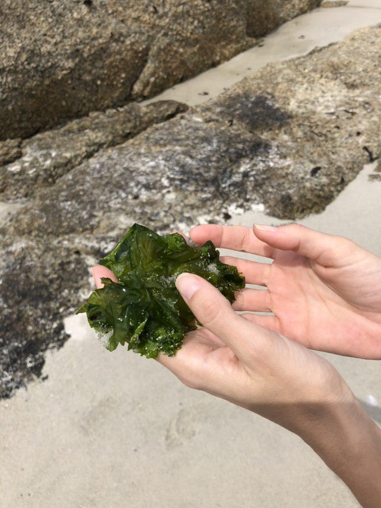 Verduras de mar | Vanesa Lorenzo